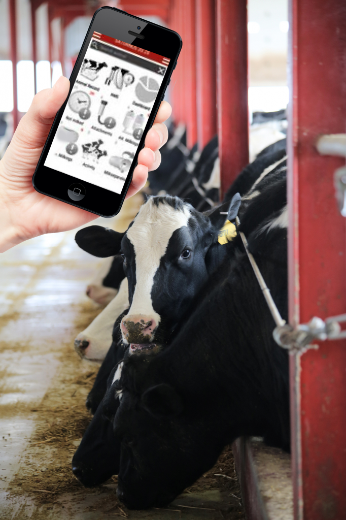AMS Galaxy Dairy Farm Software
